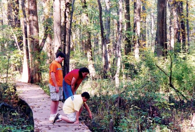 Battle Creek Cypress Swamp Sanctuary