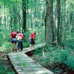 Visitors stopping to look at the swamp's native plants and wildlife.