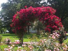 The Rose Garden at Greenwell State Park is a beautiful place for taking wedding photographs.